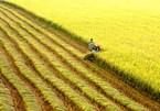 """Nông nghiệp thông minh phải giải bài toán """"dồn điền đổi thửa"""""""