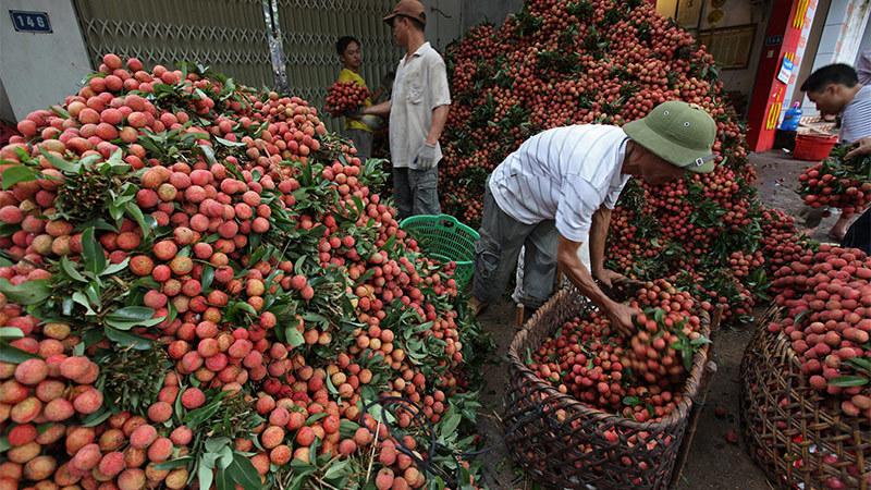 """""""Nông nghiệp thông minh phải giải trước bài toán dự báo sản lượng nông sản'"""