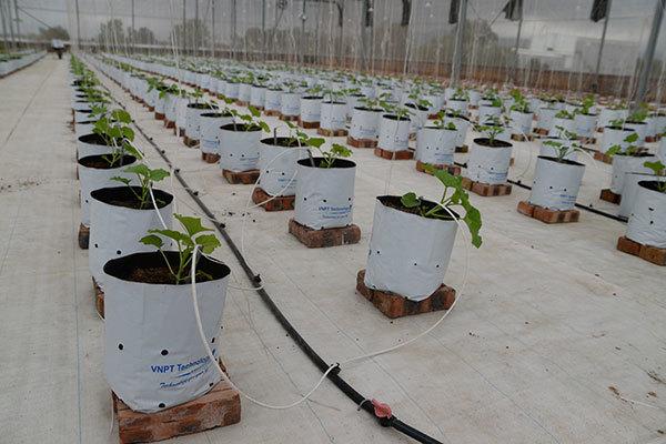 CEO VNPT Technology: 'Tìm mô hình đưa công nghệ vào nông nghiệp hướng đến toàn dân'