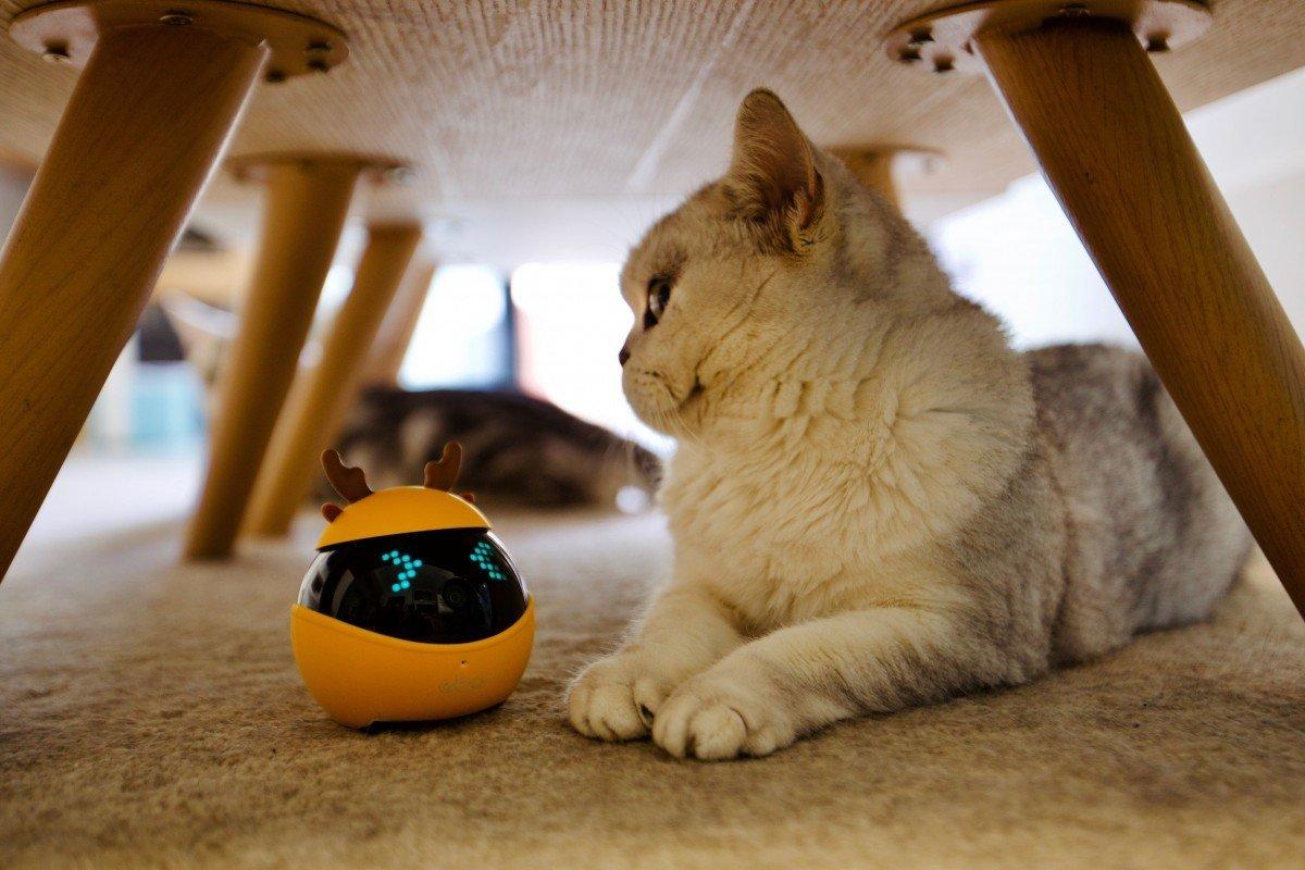 Thị trường màu mỡ từ sản xuất robot cho chó mèo