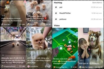 Blogger thú cưng: Từ xu hướng triệu view trở thành nghề mới của giới trẻ