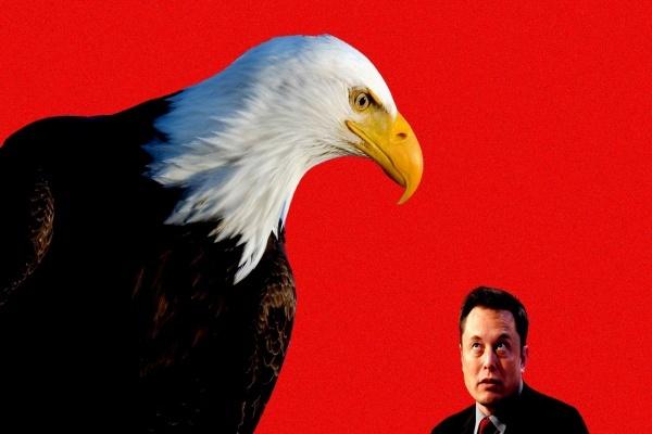 Elon Musk bị điều tra vì cáo buộc thao túng tiền điện tử