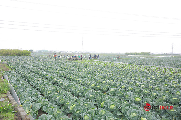 Lượng truy cập các gian hàng nông sản Hải Dương trên sàn TMĐT Vỏ Sò tăng 35%