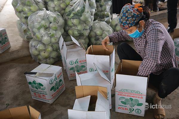 Hoạt động hỗ trợ nông dân đưa hàng lên sàn TMĐT sẽ được mở rộng ra nhiều tỉnh