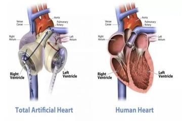 """""""Giấc mơ bất tử"""" sẽ thành hiện thực nhờ trái tim nhân tạo?"""