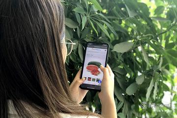 Đơn hàng nông sản trên các sàn Postmart, Vỏ Sò tăng 2 lần trong dịch Covid-19