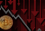 """""""Cá con"""", """"cá mập"""" đua nhau bắt đáy Bitcoin"""