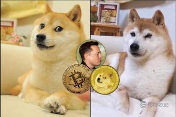 Biểu tượng chú chó Dogecoin từ đâu mà ra?
