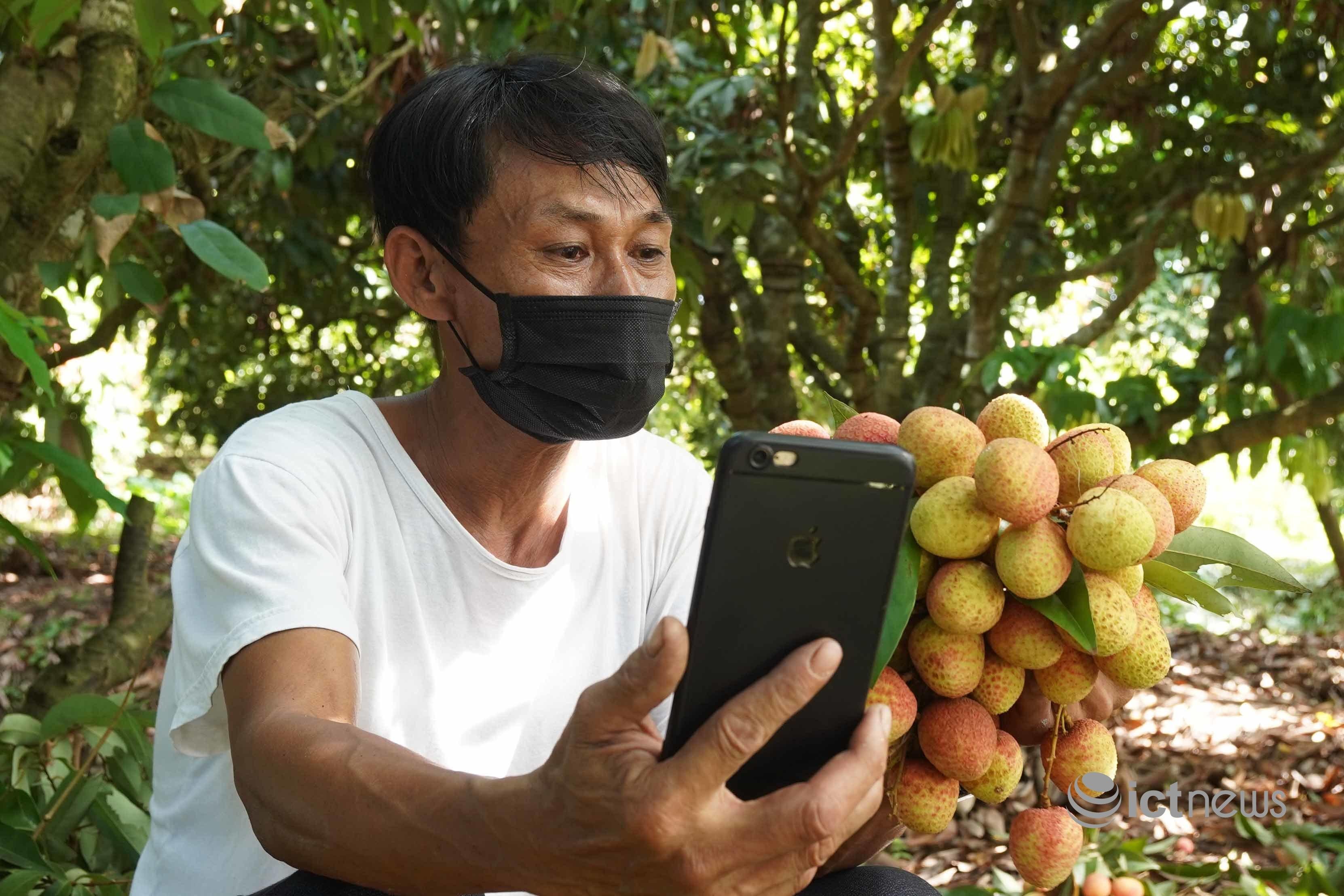 Chưa vào chính vụ, Postmart và Vỏ Sò đã tiêu thụ 515 tấn vải thiều Bắc Giang