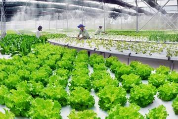 Kỳ vọng Viet Solutions 2021 có sản phẩm giúp 9 triệu nông dân sớm thoát nghèo bằng công nghệ
