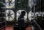 Công nhân đóng xưởng, tháo dàn 'trâu cày' rời khỏi Trung Quốc