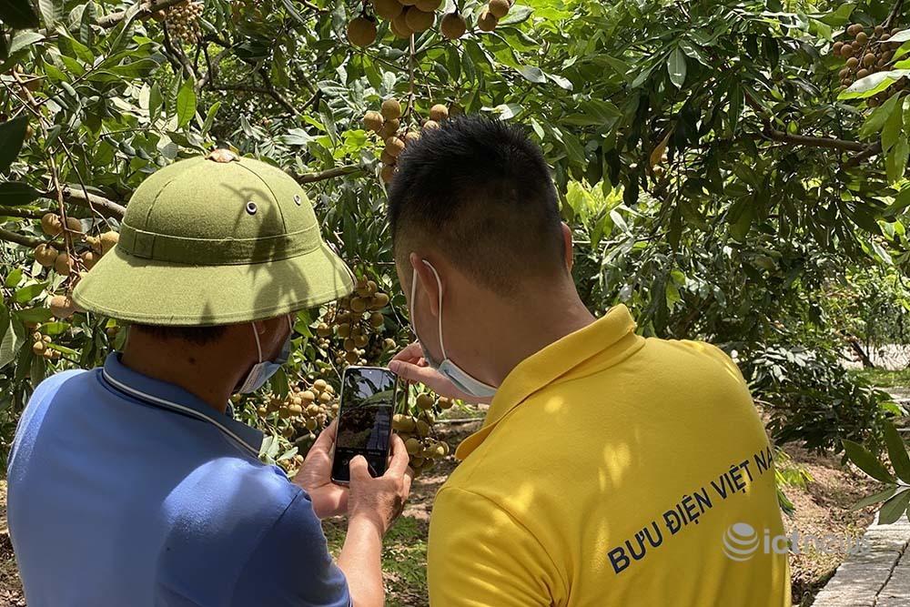 Nhãn và nông sản Hưng Yên sẽ được bán trên các sàn thương mại điện tử từ 15/7