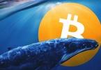 Một 'cá voi Bitcoin' vừa thức giấc sau hơn 7 năm không giao dịch